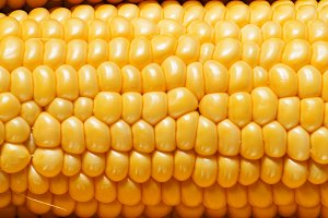 Ripe yellow corn, top view, food bac