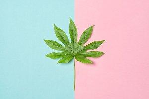 Green leaf Minimal floral flat lay