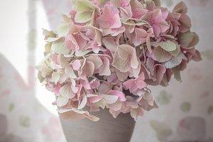 pale pink hydrangea blooms