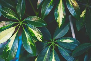 Exotic green leaves background