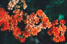 Small orange flowers background by  in Nature