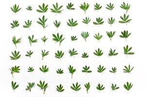 Background of green leaves in a row.