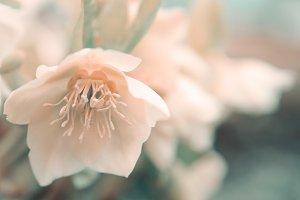 Pastel flower.