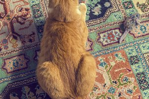 Cat on carpet with toy mouse