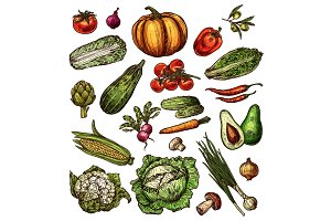 Vegetables sketch vector icons