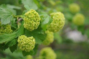 Green plant flower