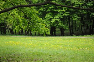 Spring landscape parc