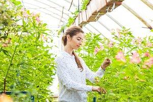 Grow flowers alstroemeria