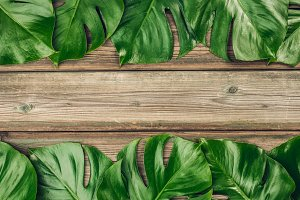 Tropical monstera leaves on wooden b