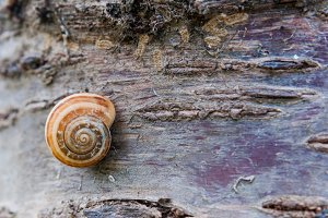 Snail on a tree in a forest