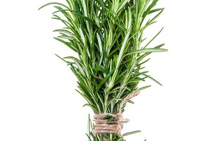 Rosemary sprigs tied in bundle isola