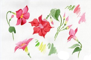 Wildflower red dipladies PNG set