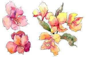 Alstroemeria pink flower PNG set