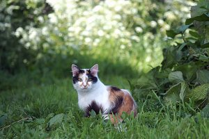 Cat in grass. A portrait of the