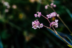 Moody pink flower branch background.