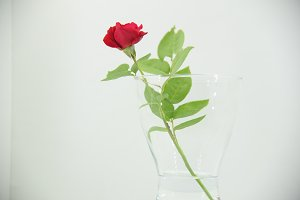 Vase with red rose in high key