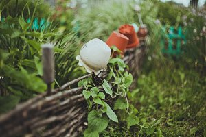 Lath fence with clay pots