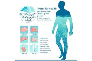 Human body and internal organs