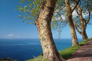 Trees overlooking the ocean