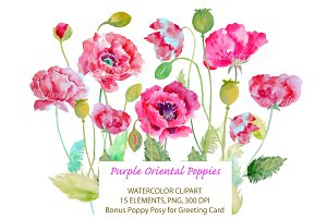 Watercolor Purple Oriental Poppy