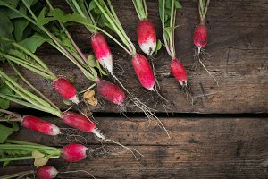 Still life fresh radish vegetables