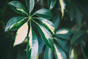 Exotic leaves background