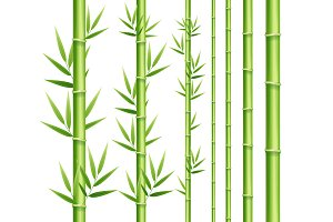 Bamboo Decor Element Set. Vector