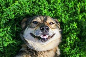милый щенок лежит на зеленом лугу