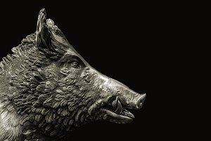 Wild Pig Sculpture Dark Background