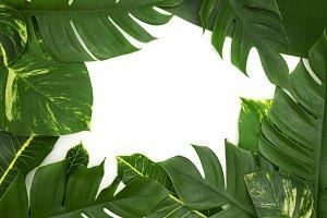Still life photo tropical concept