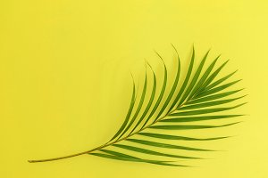 Still life colour photo palm leaf on