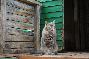 Cat on the steps of an old village