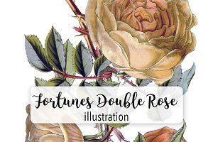 Florals: Fortunes Double Yellow Rose