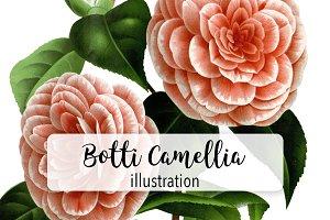 Florals: Albino Botti Camellia
