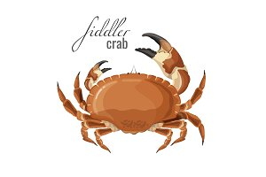 Fiddler crab nature marine animal