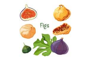 Fig types of plant dried and fresh