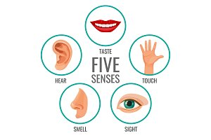 Five senses of human perception