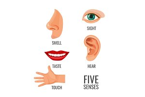 Five senses with titles at body