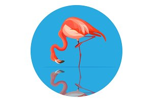 Pink flamingo animal tall wading