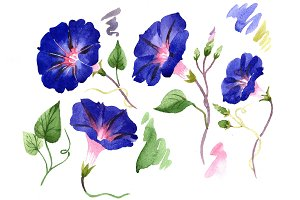 Wildflower ipomoea dark blue PNG set