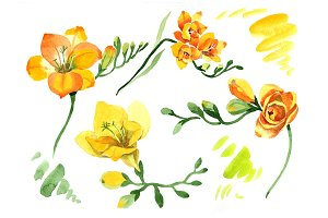 Wildflower yellow freesia PNG set