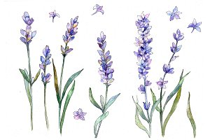 Sweet purple lavender flower PNG set