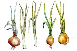 Watercolor onion vegetables PNG set