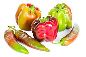 multicolored paprica bell pepper iso