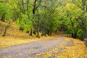 Road in the autumnal forest