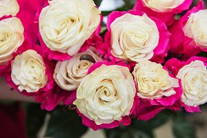 Beautiful two color roses