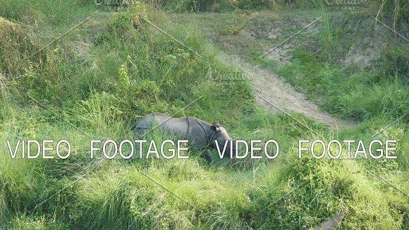 Rhino eats green grass. Chitwan