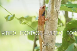 Orange lizard on the tree finds