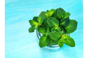 Fresh mint leaf on blue background