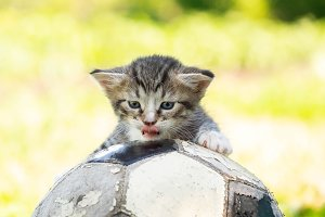 kitten with a soccer ball